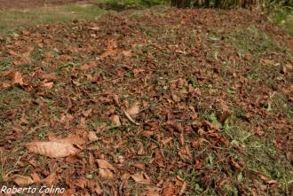 acolchado, compostaje en superficie, método babesten, agricultura sin laboreo, no laboreo, areitz soroa, agricultura ecológica, compost, composting
