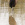 Morito (Plegadis falcinellus)