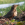 aves de Galdames, zorzal alirrojo, turdus iliacus, redwing,  birding, birdwatching