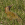 aves de Galdames, pito real, picus viridis, green woodpeker, birding, birdwatching