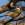 aves de Galdames, Herrerillo común, Parus caeruleus,  birding, birdwatching