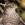 aves de Galdames, Gavilán, Accipiter nisus,  birding, birdwatching
