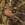 aves de Galdames, Pinzón común macho, Fringilla coelebs, birding, birdwatching