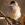 aves de Galdames, Curruca capirotada hembra, Sylvia atricapilla, birding, birdwatching