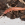 Dipluro, Campodea, insecting, areitz soroa