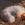 escarabajo, larva, gusano blanco, insecting, areitz soroa
