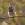 Ficedula hypoleuca, papamoscas cerrojillo, aves, birds, birding, birdwatching, pied flycatcher